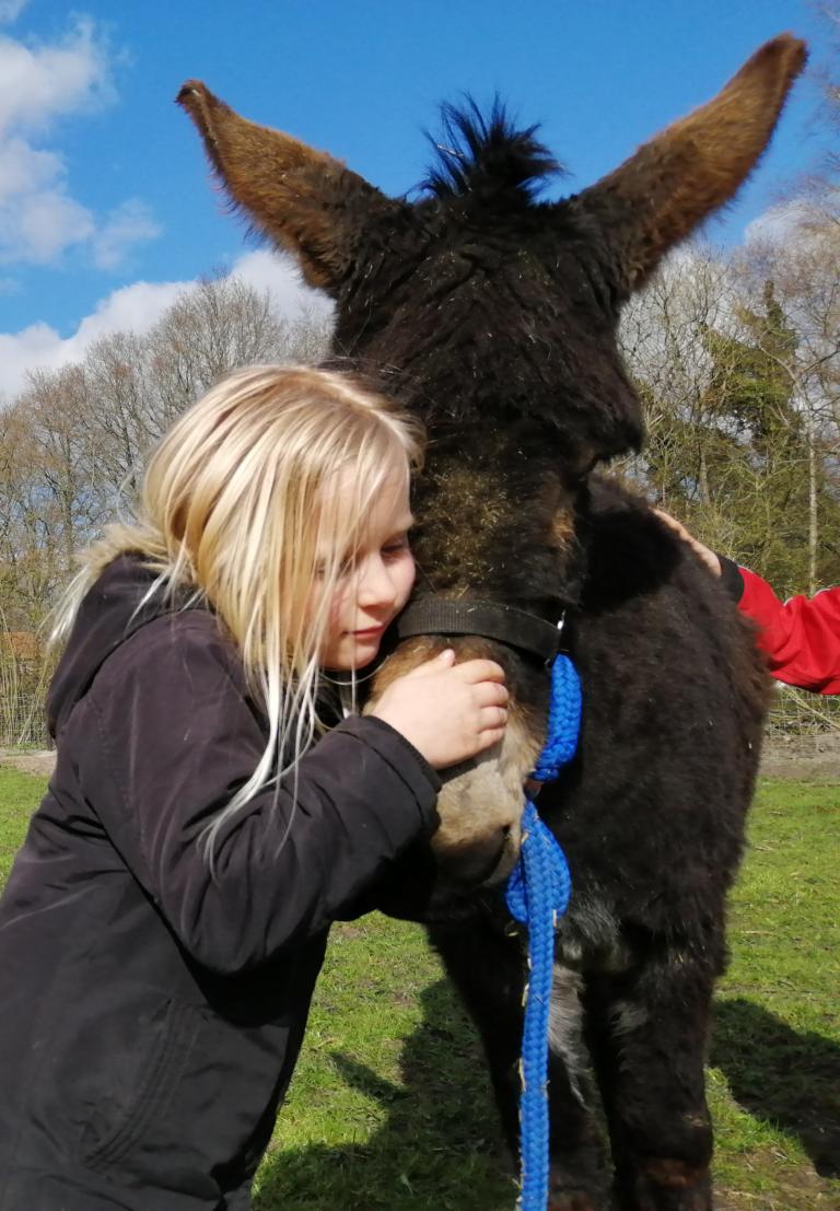 Coaching met ezels - Asinotherapie voor kinderen