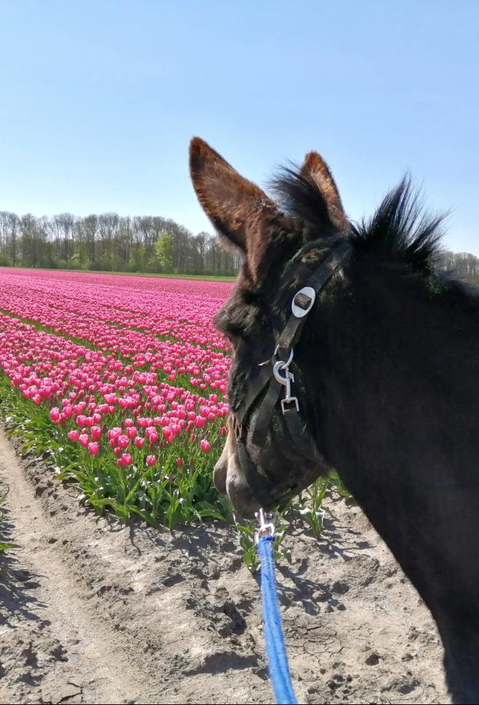 Coaching met ezels - asinotherapie
